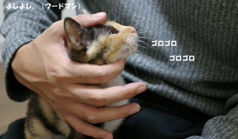 yosiyosiのコピー