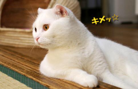 きめっ25のコピー