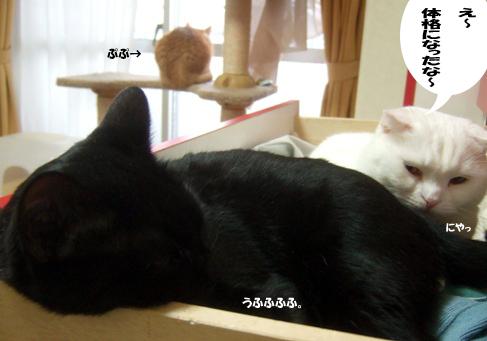 猫団子のコピー