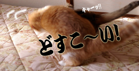 朝稽古2コピー