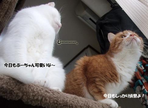 ぷーちゃん021のコピー