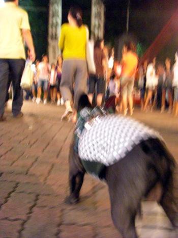 2008-09-14 秋祭り3