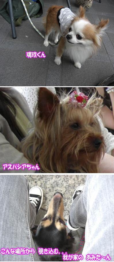 ohukai_04.jpg