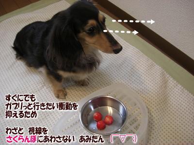 sakuranbo_2.jpg