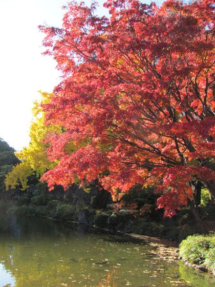 日比谷公園紅葉狩り