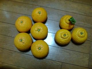 甘夏と三宝柑