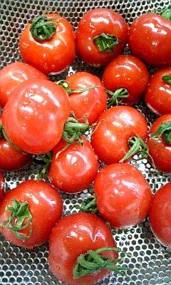 プリントマト