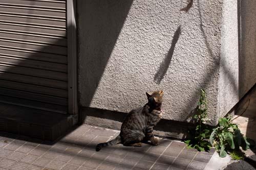 090426根津の猫とママ1
