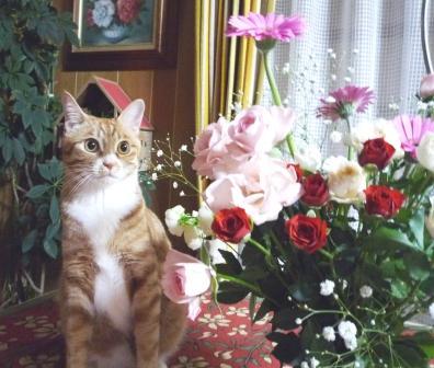 花とてっぺい