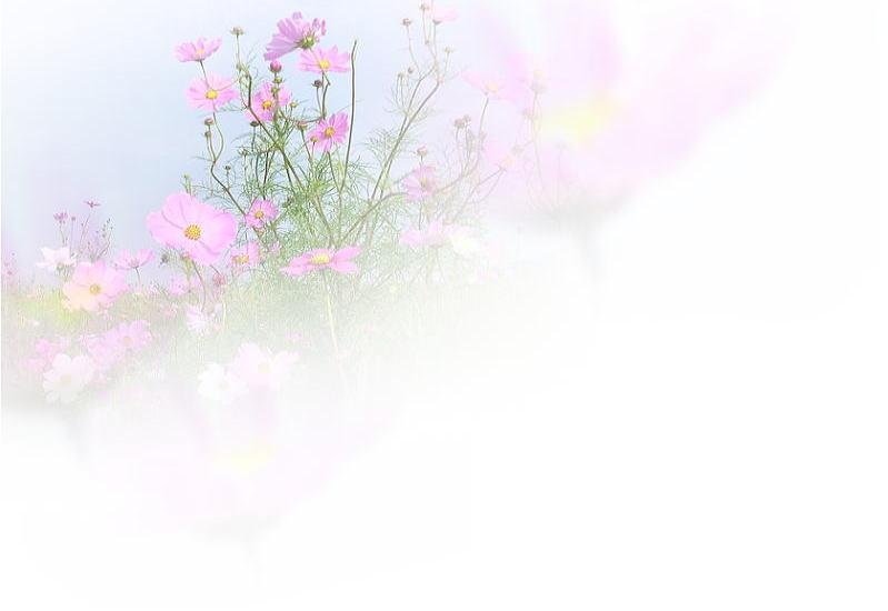 cosmos017.jpg