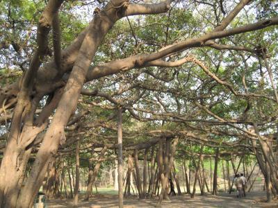インドの植物園