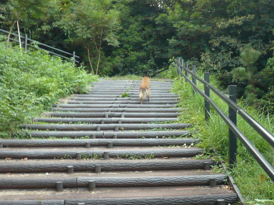 階段運動おぃっちに