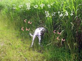草の中?1