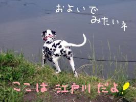 江戸川だよ1