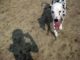 ジェイピーと私の影