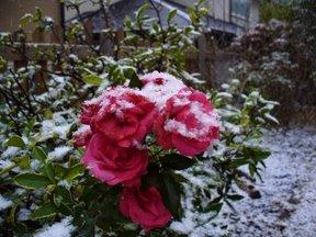 雪やこんこん1