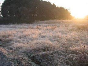凍る野原1