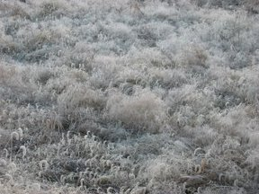 凍る野原2