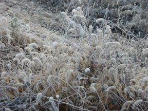 凍る野原3