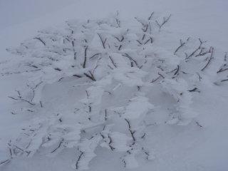 雪の表情4