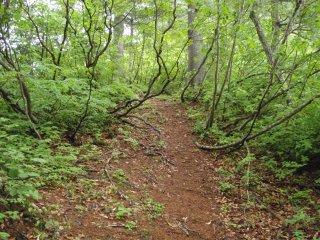 快適な登り道
