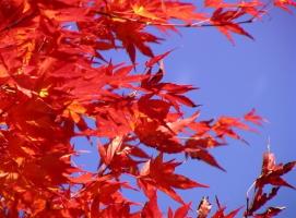 そろそろ紅葉の季節ですね☆