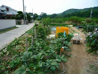 nikoさん家野菜 033