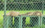 08/08/01 ホワイトライオン
