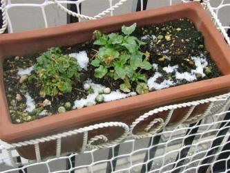 11月8日初雪