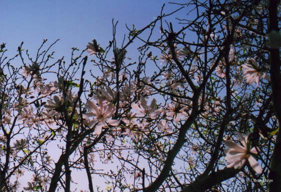 09春の庭