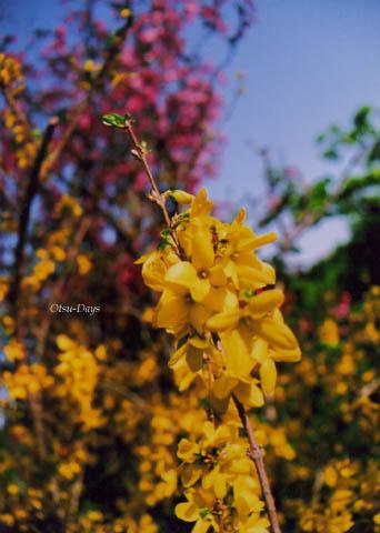 09春の庭2
