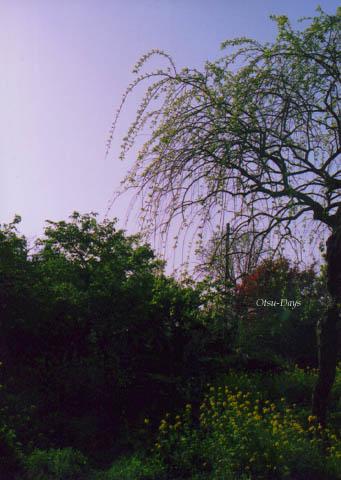 09春の庭3