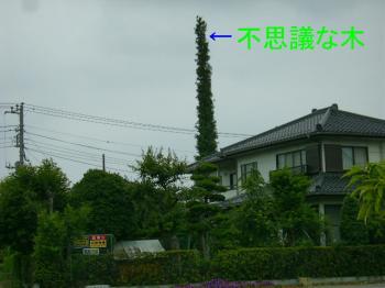 P6080021.jpg