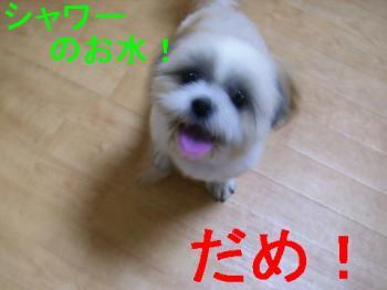 P6110058.jpg