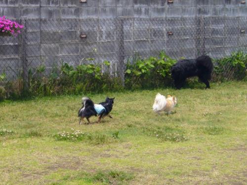 kotarou 005_convert_20080610212733