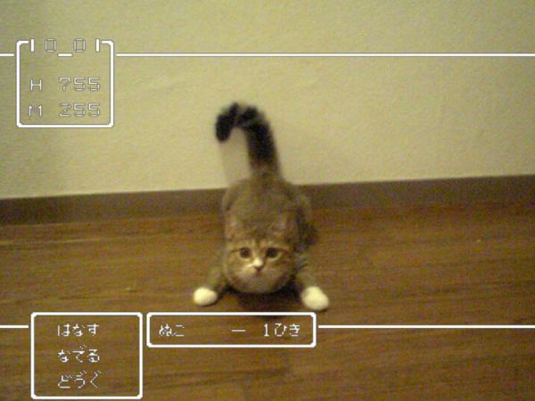 vip948488.jpg