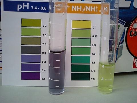 天然海水水質検査01