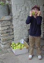 Lacock20002 apple box