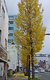 08Christmas (3)tree