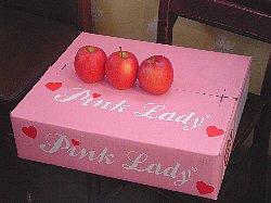 pinklady1.jpg