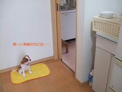 blog1_20080916190636.jpg