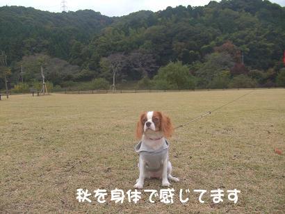 blog3_20081109215716.jpg