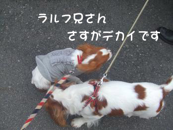 blog4_20081111141512.jpg