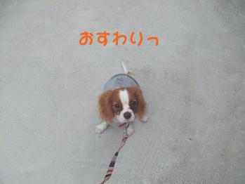 blog5_20081111135616.jpg