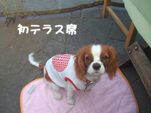blog5_20081123231339.jpg