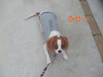 blog6_20081111135636.jpg
