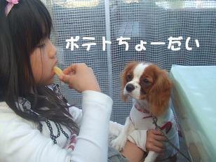blog6_20081123231550.jpg