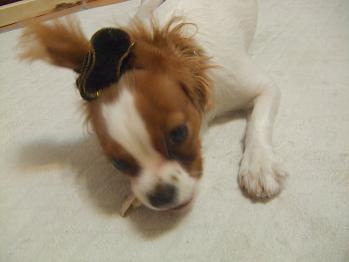 blog6_20081130223540.jpg