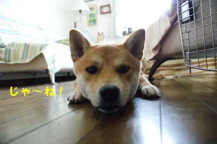2008_06210069.jpg