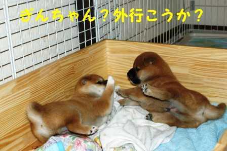2008_06240123.jpg